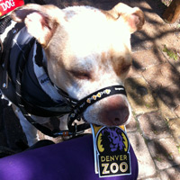 Cash holding a Denver Zoo Patch at the Denver Zoo
