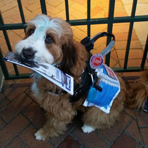 Service Dog Sulley, Mixed Breed (aka Slovakian Mop Dog)