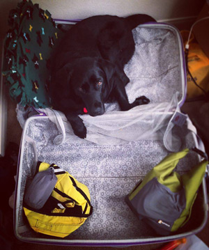 Gabrielle gives close inspection of her suitcase