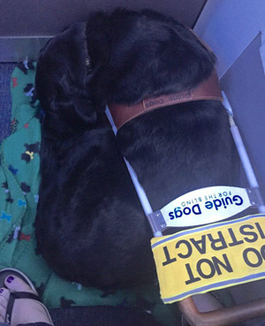 Gabrielle in harness, curled up on the floor in the bulkhead row of seats in an airplane
