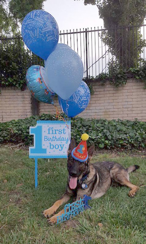 Patrick's 1st Birthday