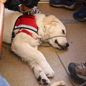 Cam'O lies perfectly content on railcar floor in deep sleep as the train ascends the steepest part of the mountain.