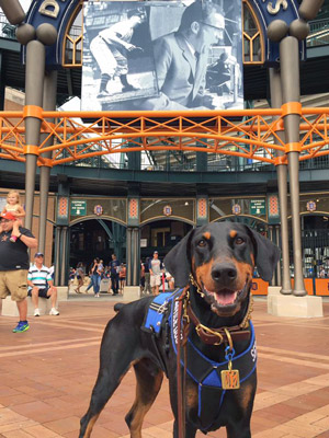 Kaline stands outside the main gate of Comerica Park in Detroit, wearing a blue and black harness and brass Tigers tag.