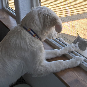 Cam'O viewing cat outside the window.