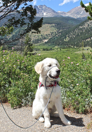 Cam'O sits at a stop along Trail Ridge Road with a view of the mountains.