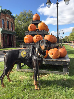 Kaline, in black harness and cape, at a pyramid of jack-o-lanterns at Greenfield Village