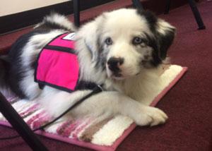 Velvet the service dog lays on her mat