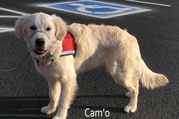Cam'O the service dog