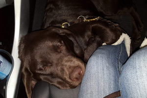 Gary catches some shut-eye in the car.