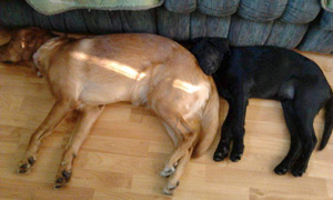 Ricki and baby Chanel sleeping together...Ricki makes a great pillow