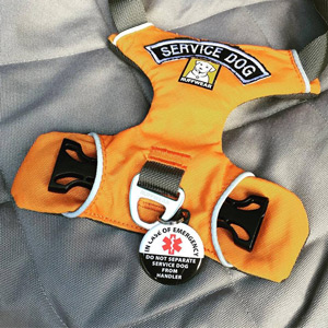 Kaline's orange Ruffwear harness, featuring an arched patch from Clevenger and a custom Do Not Separate From Handler tag from Creative Clam.