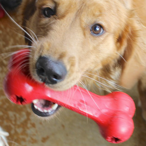 Pat displays the hard but flexible rubber red Kong bone. . .