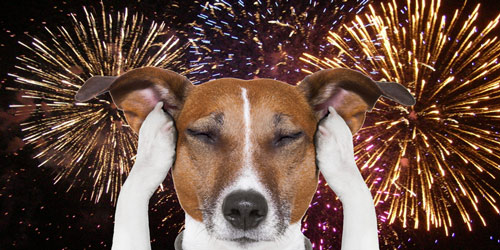 Dog covering his ears with fireworks behind him