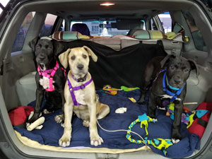 Penny, Bianca, and Bernard all loaded up in the car ready for their trip.