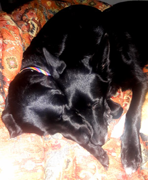 Kash and Gabrielle snuggling, asleep on the bed on top of a patterned comforter with their noses together.