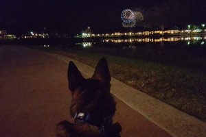 Patrick watching fireworks in the far distance.