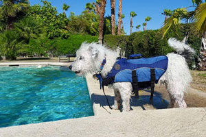 Ozzy in his life vest next to a pool...water safety!