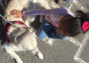 Cam'O gets a gentle pet on his back from a first grade girl.