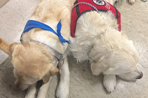 Cam'O with his pal Cotton, a therapy dog. Cam'O wears his red PPAD puppy coat and Cotton wears her blue therapy scarf.