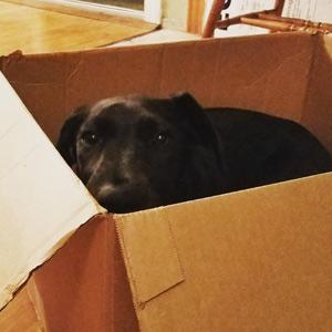 Penny laying inside a cardboard box.
