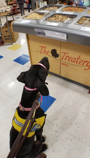 Penny admiring the treat bar at the pets store while showing self restraint.