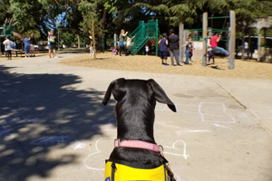 Penny observing children playing on a park play ground.