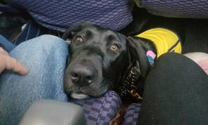 Penny settles in onboard