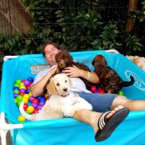 Kid pool with poodle pups
